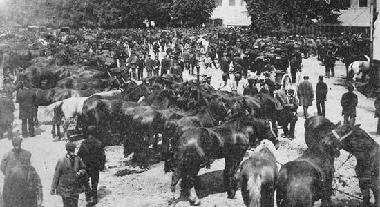 Engelroderpad_paardenmarkt