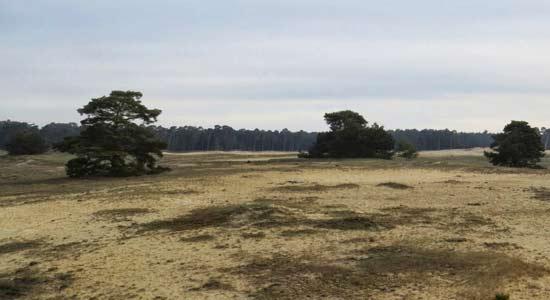 Wekeromse-zand-Ger-Jan-van-Noord